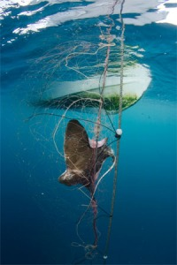 MurchByCatch